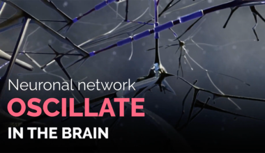Neuronal-network-oscillations