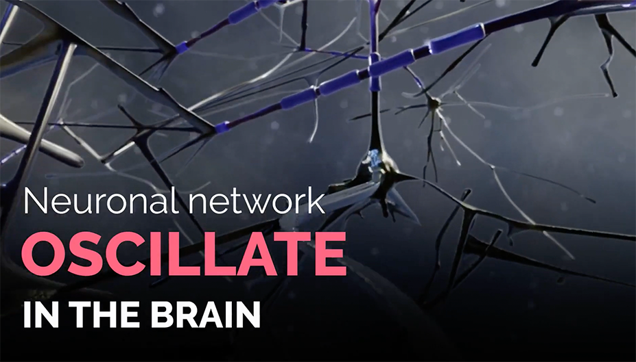 Neuronal network oscillations: the test biomarker for CNS drugs