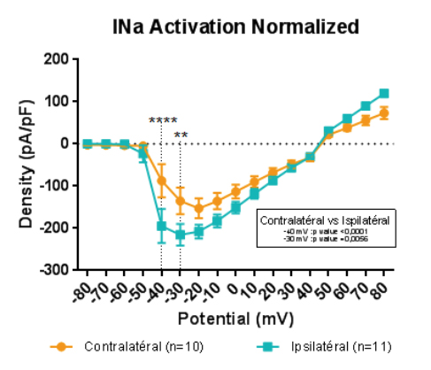 INaActivation Normalized