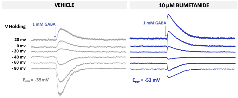 Figure showing Gaba induced currents