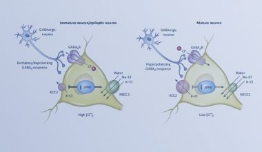 intracellular neuronal chloride concentration mechanism