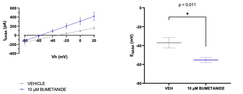 input output characteristic curve - Bumetanide