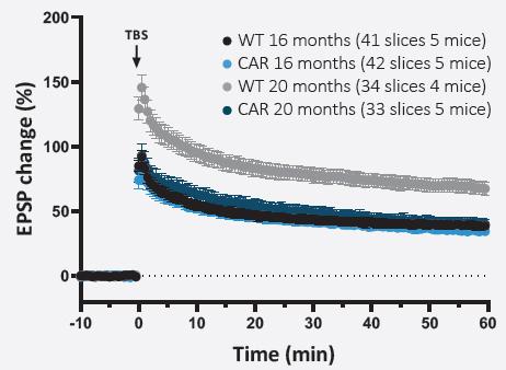Long Term Potentiation Tg2576