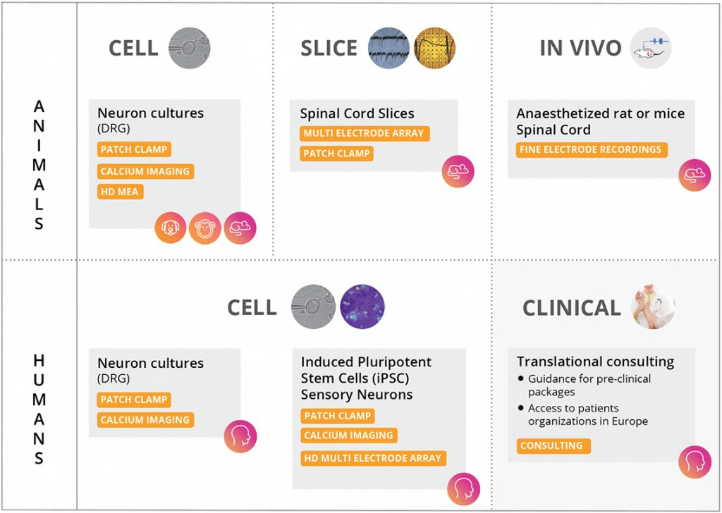 Pain assays expert platforms Neuroservices-Alliance