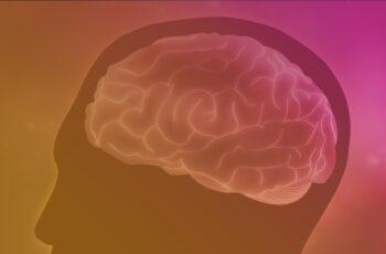 Webinar – in vivo models of ADHD
