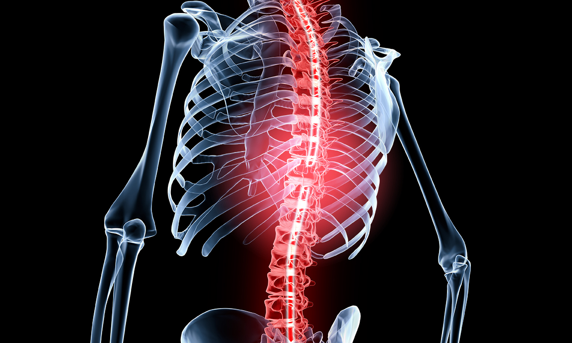 Transparent human body showing injured spinal cord