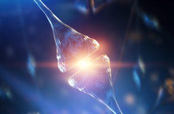 WEBINAR – Electrophysiology in anesthetized rodents for analgesic drug development