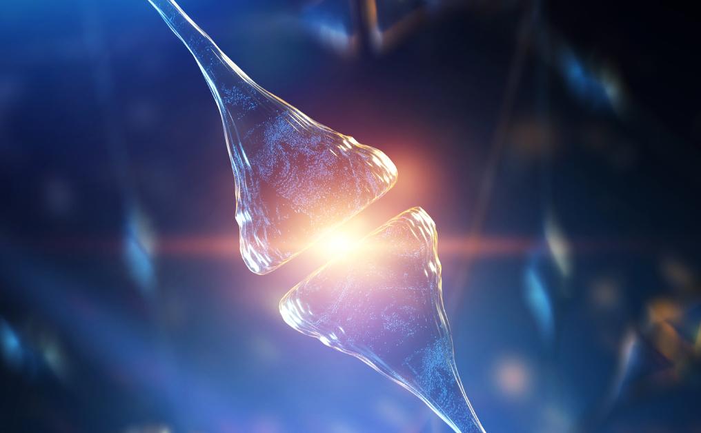 Neuron electric signal